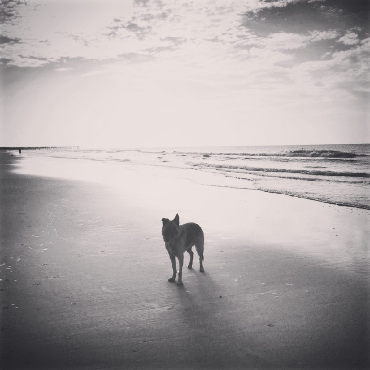 Instagram image of dog standing in ocean